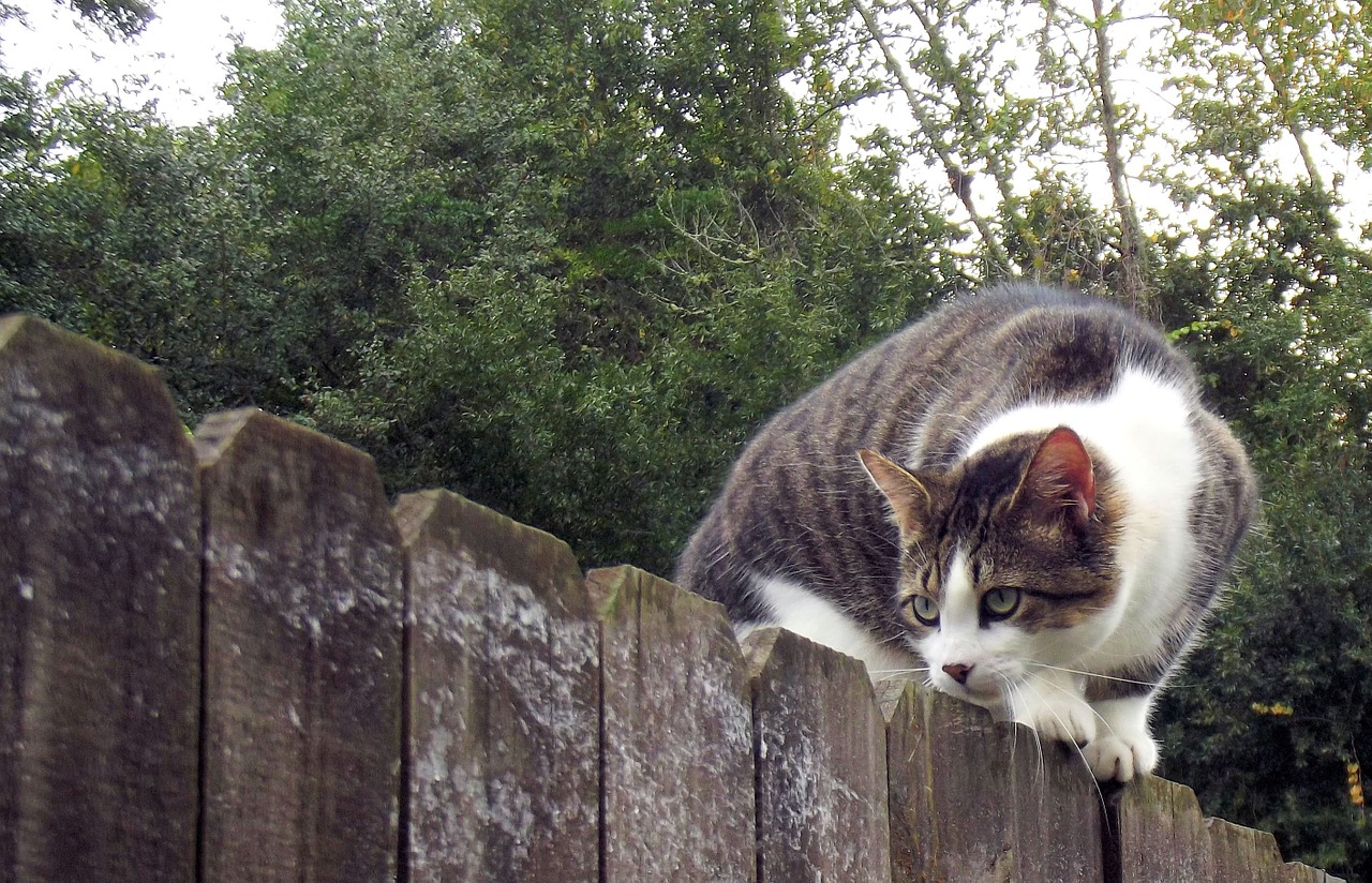 How to get rid of neighbors cats in my yard: 18 Tips and ...