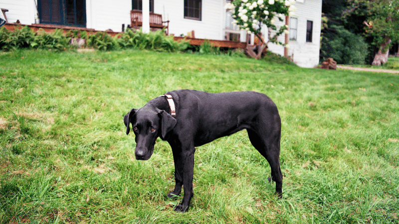 How To Get Rid of Neighbors Dog in my Yard: 8 Tips and Gadgets that will Help